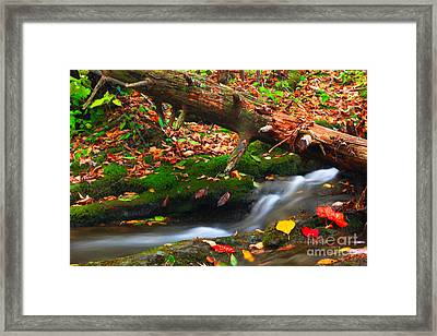 Autumn Paths Framed Print by Everett Houser