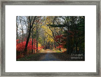 Autumn Paths    No.2 Framed Print