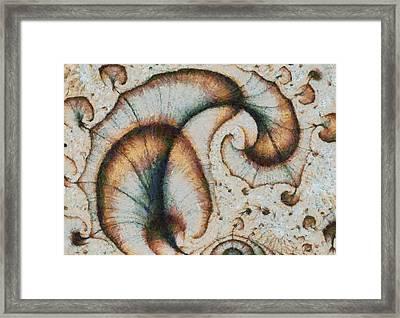 Autumn Peacock Framed Print