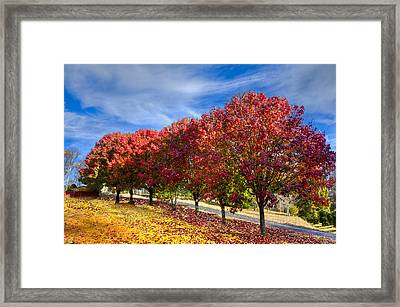Autumn Pear Trees Framed Print by Debra and Dave Vanderlaan