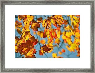 Autumn Petals Framed Print by JAMART Photography