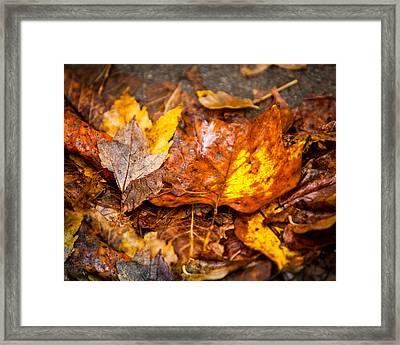 Autumn Pile Framed Print