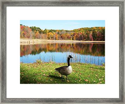 Autumn Pond Goose Framed Print