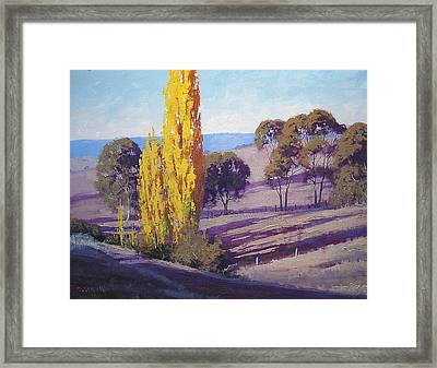 Autumn Poplars Framed Print by Graham Gercken
