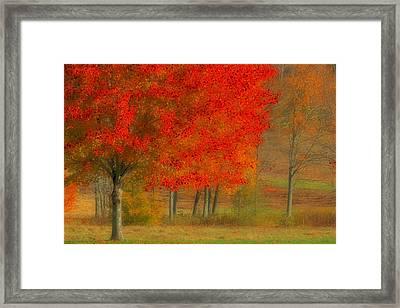 Autumn Popping Framed Print by Karol Livote
