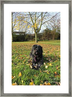 Framed Print featuring the photograph Autumn Portrait by Vicki Spindler