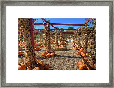 Autumn Pumpkin Patch Framed Print by Joann Vitali