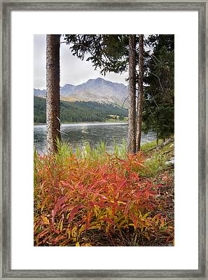 Autumn Quandry Framed Print