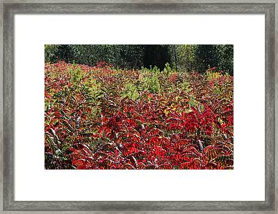 Autumn Radiance Framed Print by James Hammen
