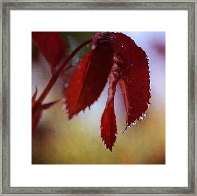Autumn Rain 2 Framed Print by Fraida Gutovich