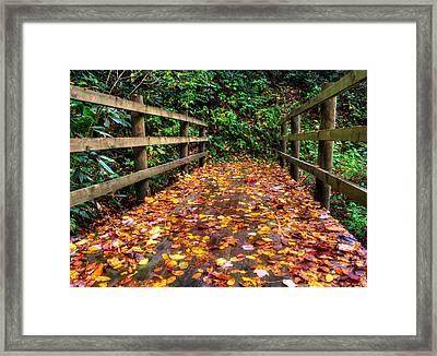 Autumn Rain At Joyce Kilmer Memorial Forest Framed Print