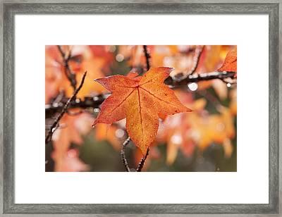 Autumn Rain Framed Print by Michelle Wrighton