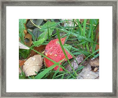 Autumn Raindrops Framed Print