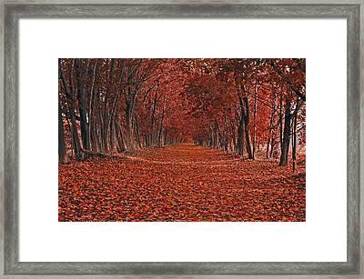Autumn Framed Print by Raymond Salani III
