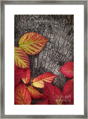 Autumn Red Leaves Framed Print