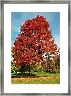 Autumn Red Framed Print by Frozen in Time Fine Art Photography