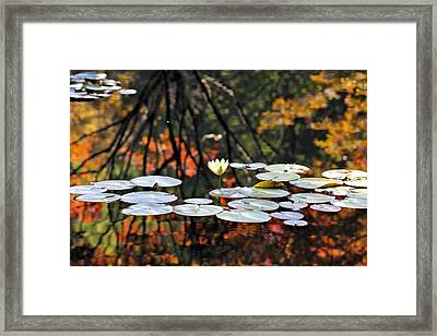 Autumn Reflection Framed Print by Katherine White