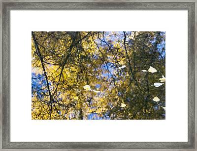Autumn Reflections Framed Print by Dana Moyer