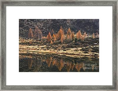 Autumn Reflections Framed Print by Simona Ghidini