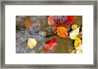 Autumn Ripples Framed Print by Robin Erisman