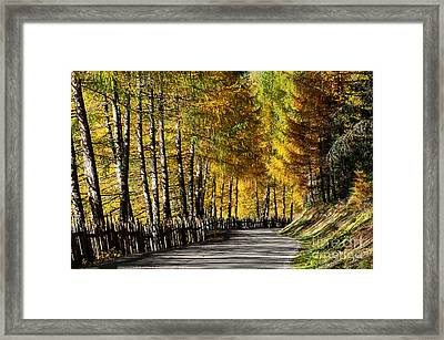 Winding Road Through The Autumn Trees Framed Print