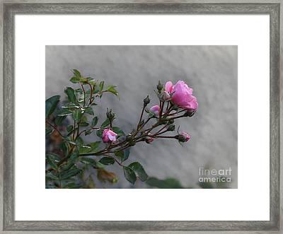 Autumn Rose Framed Print by Lutz Baar