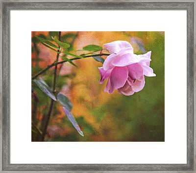 Autumn Rose Framed Print by Theresa Tahara