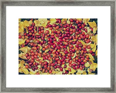 Autumn Rosehips  Framed Print by Tim Gainey