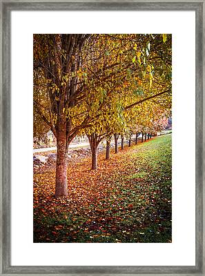Autumn Row Framed Print by Debra and Dave Vanderlaan