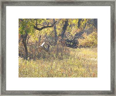 Autumn Run Framed Print