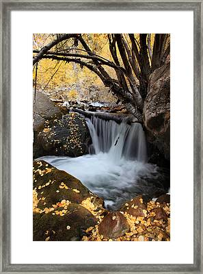 Autumn Rush Framed Print
