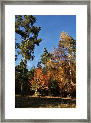 Autumn Scene Framed Print
