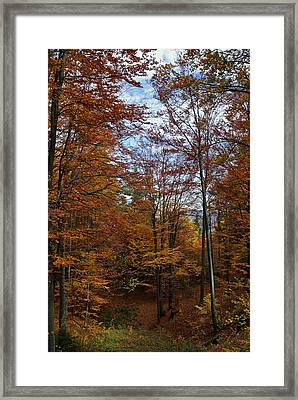 Autumn Scene II Framed Print