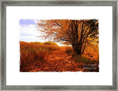 Autumn Scenery Framed Print by Sophie Vigneault