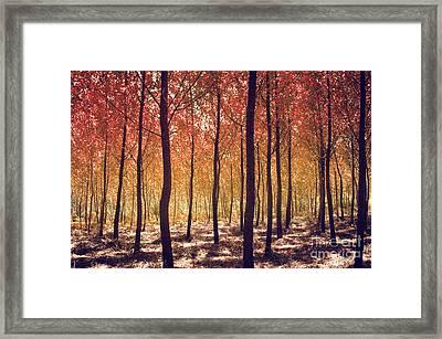 Autumn Scenic Framed Print