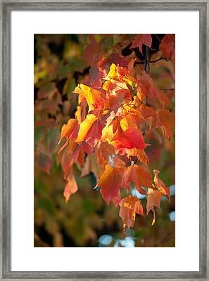 Autumn Framed Print by Sebastian Musial