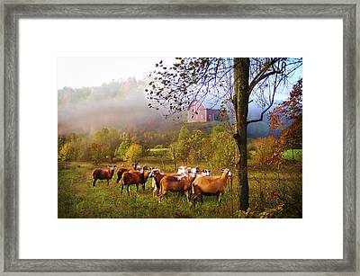 Autumn Sheep Framed Print