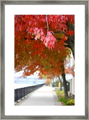 Autumn Sidewalk Framed Print