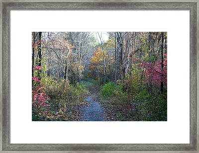 Autumn Silence No.2 Framed Print by Neal Eslinger