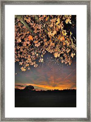 Autumn Sky And Leaves 1 Framed Print
