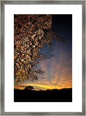 Autumn Sky And Leaves 2 Framed Print
