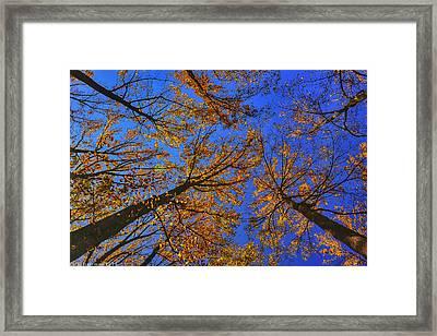 Autumn Sky Framed Print by Kathi Isserman