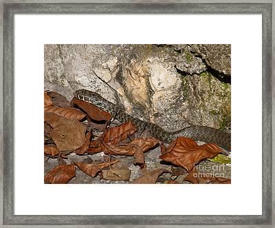 Snake - Autumn Leaves Framed Print