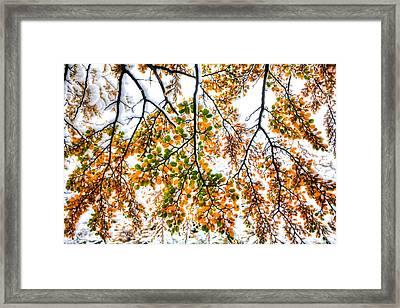 Autumn Snow Framed Print by Roman St