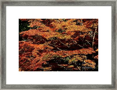 Framed Print featuring the digital art Autumn Solarisation 1 by Rudi Prott