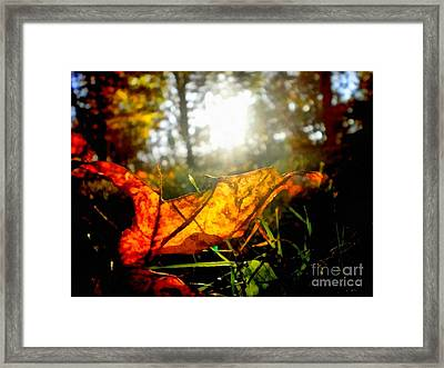 Autumn Splendor Framed Print by Janine Riley