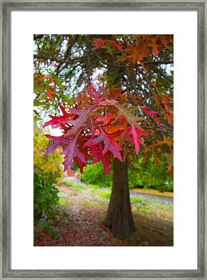 Autumn Splendor Framed Print by Mamie Thornbrue