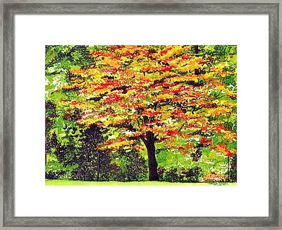 Autumn Splendor Framed Print by Patricia Griffin Brett