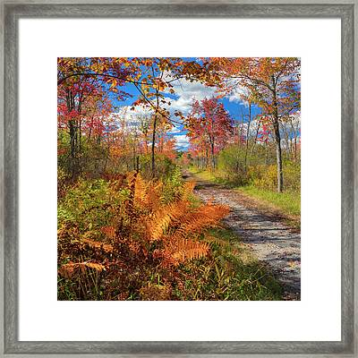 Autumn Splendor Square Framed Print by Bill Wakeley