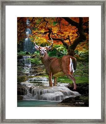 Autumn Stag Framed Print